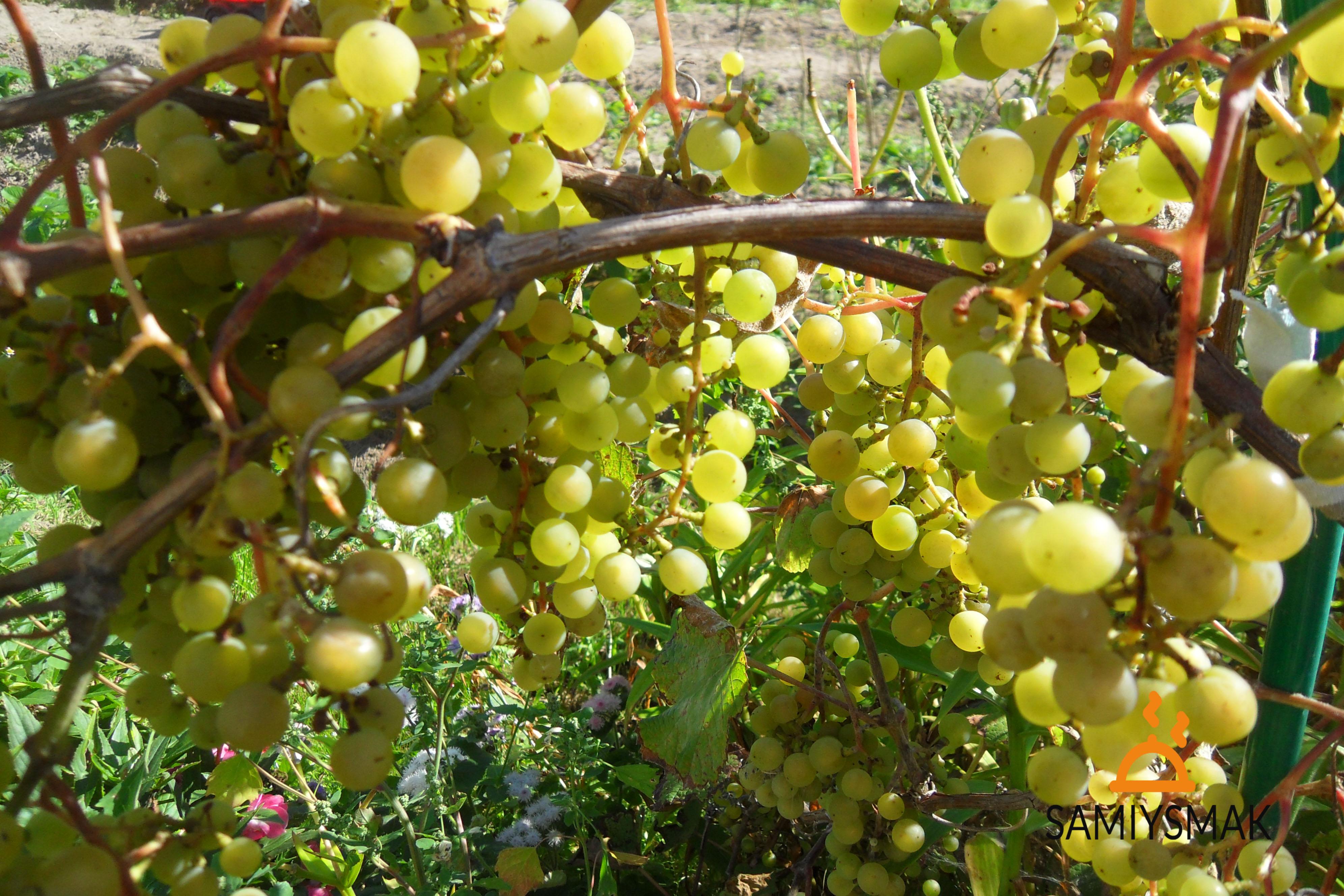 Рецепты заготовки домашнего винограда на зиму