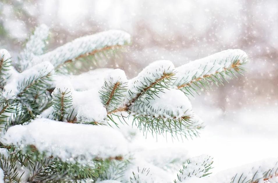 Стихи для заучивания зимой