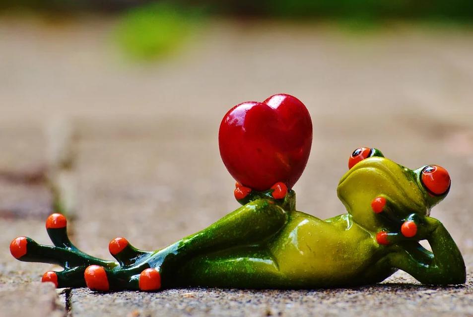 Лягушка с сердцем