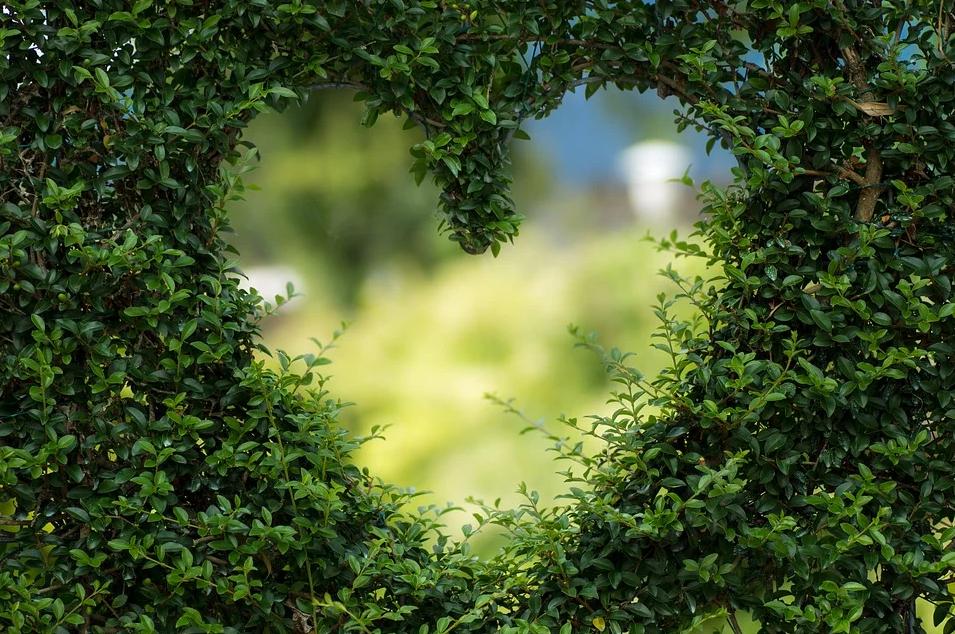 Сердце в зелени