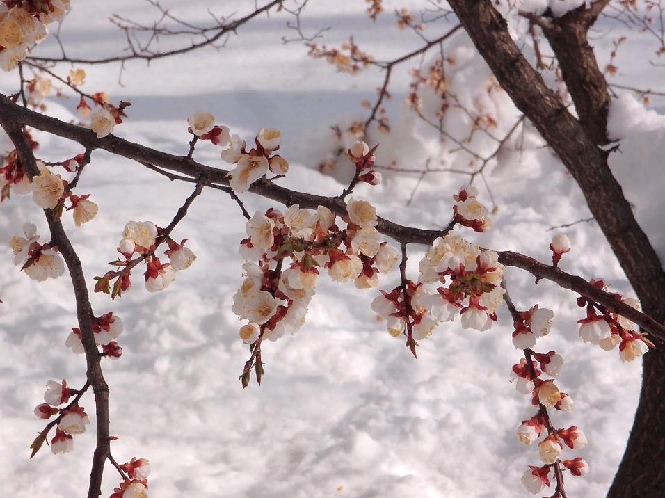Красивые стихи бабушке на 8 марта
