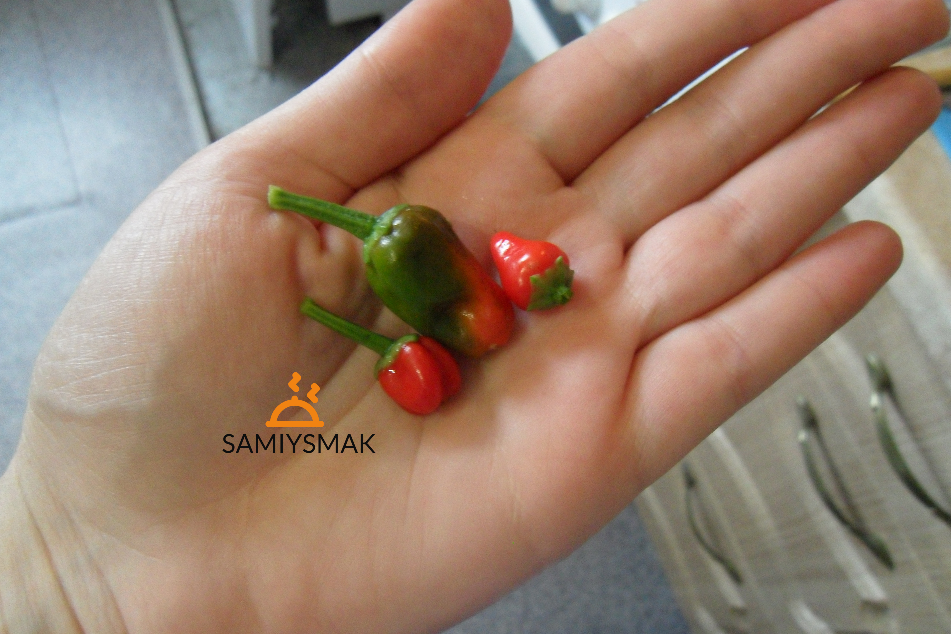 Мелкий горький перец