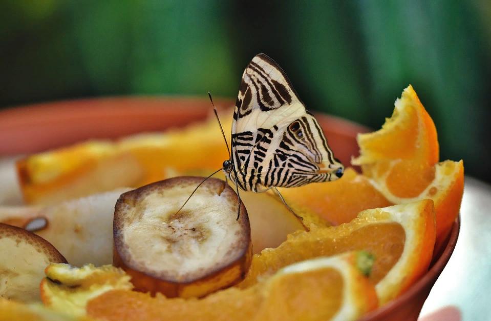 Апельсины для маринада