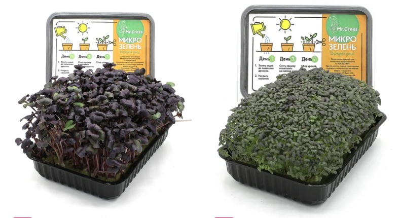 Набор для выращивания зелени